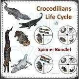 Reptiles: Crocodilians Life Cycle Spinner Bundle