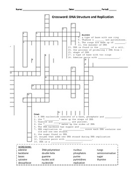 crossword dna structure and replication by kathy sci tpt. Black Bedroom Furniture Sets. Home Design Ideas