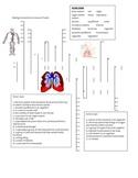 Biology Crossword Puzzle - Homeostasis, Circulatory, Respiratory Systems
