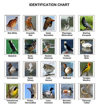 Crossword Puzzles -- Birds 3