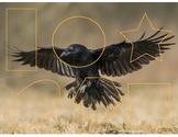 Crow Shape Puzzle