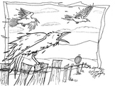Crows coloring sheet