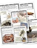 Crustacean Unit and Lap Book