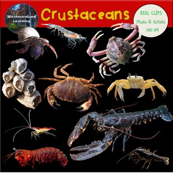 Crustaceans Crab Clip Art Photo & Artistic Digital Stickers