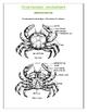 Crustaceans Handout