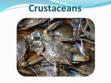 Crustaceans - Marine Life Vol. 2 - Slideshow Powerpoint Pr