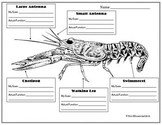 Crustaceans Parts & Functions (Crayfish)