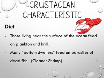 Crustaceans Power Point and Tab Booklet