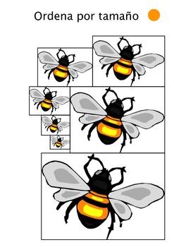 Cuaderno de estudio sobre insectos y bichos