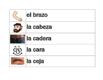 Cuerpo (Body in Spanish) word wall