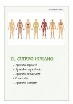Cuerpo humano: aparatos