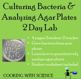 Culturing Bacteria and Analyzing Bacteria Agar Plates 2 Da