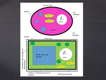 Cut, Paste, Draw, and Label an Animal and Plant Cell