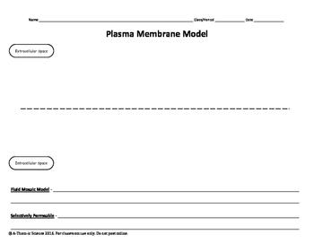 Cut & Paste Plasma Membrane Model
