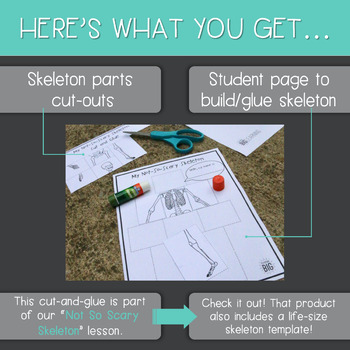 Cut-and-Glue Skeleton Page