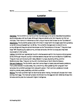 Cuttlefish - Review Article Facts Information Questions Vocab Word Search