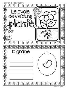 Cycle de vie - la plante