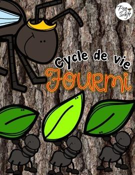 Cycle de vie - la fourmi