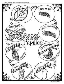 Cycle de vie - le papillon