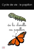 Cycle du papillon / Butterfly cycle