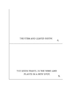 Cycle of A Plant Book