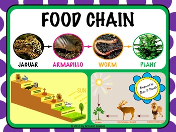 Food Chain - Unit with Worksheets