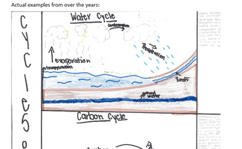 Cycles of Matter Diagram activity