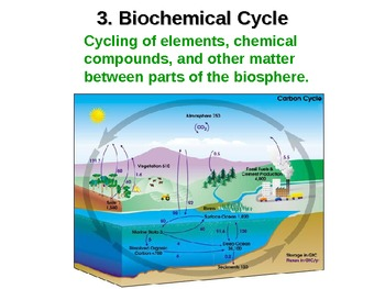 Cycles of Matter in our Environment