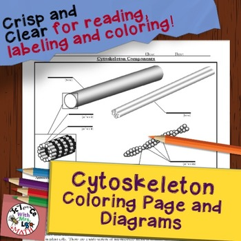 Cytoskeleton Diagram Coloring Page and Reading Page