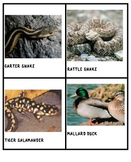 DESERT FOREST WETLAND Animal Cards