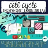 DISTANCE LEARNING Cell Cycle Lab Activity - Digital & Pape