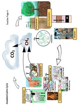 DIY Carbon Cycle