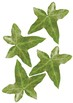 Natural DIY ivy leaf chain