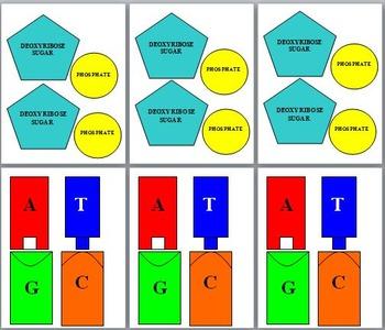 DNA: A Complete Lesson Plan Unit