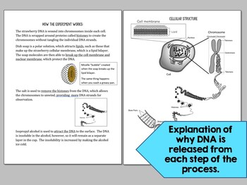 DNA Basics and Extraction Lab