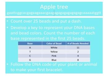 DNA Bracelets