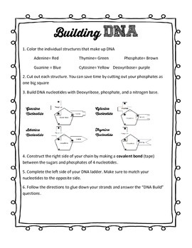 DNA Build and replication activity