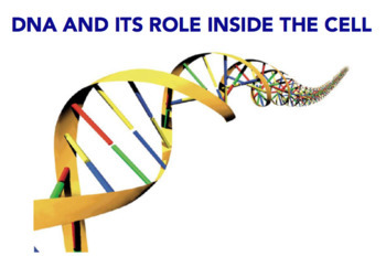 DNA structure, DNA & RNA, Transcription & Translation (Editable)