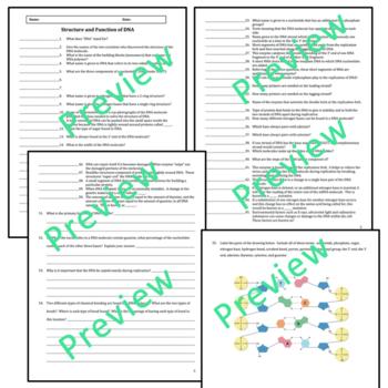 DNA (Deoxyribonucleic Acid) Quiz / Review / Homework (Advanced)