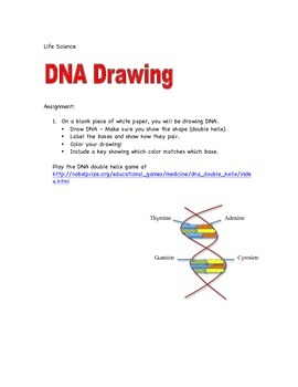 DNA Drawing Project - 7th Grade Life Science