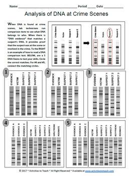DNA Evidence Worksheet Sample - Forensic Science 101