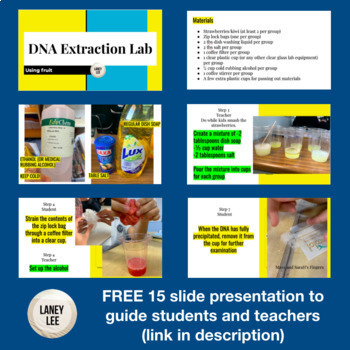 DNA Extraction Lab - FREE Step by Step Guide with Pictures