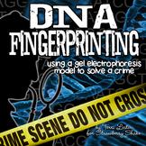 DNA FINGERPRINTING: Modeling Gel Electrophoresis to Solve a Crime