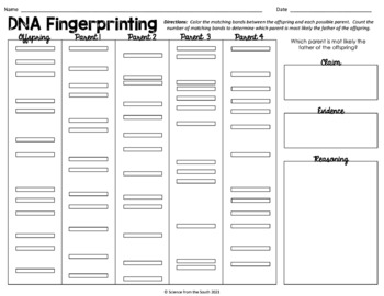 DNA Fingerprinting Coloring Worksheet for Interactive Notebooks and More