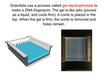 DNA Fingerprinting and Gel Electrophoresis SMART Notebook