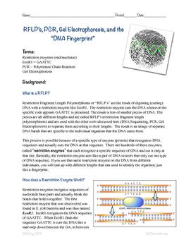 DNA Gel Electrophoresis Lab