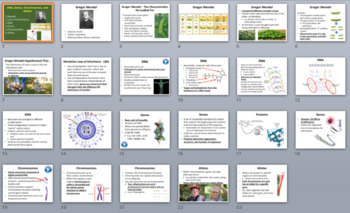 DNA, Genes, Chromosomes, and Alleles - A Genetics Introduction Lesson
