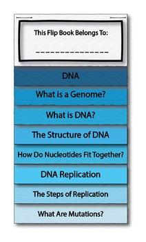 DNA Interactive Flip Book and Quiz