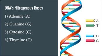 DNA Lesson -- PowerPoint, Notes, Do Now Kinesthetic Activity, Review Questions