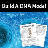 DNA MODEL - Double Helix
